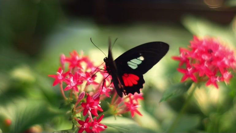Destination alsace nature et bien tre - Images de papillon ...